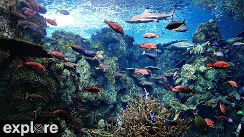 Aquarium of the Pacific's Tropical Reef Cam with Explore.org